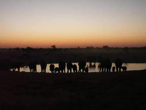 Elephants at Dusk - Okaukuejo Waterhole