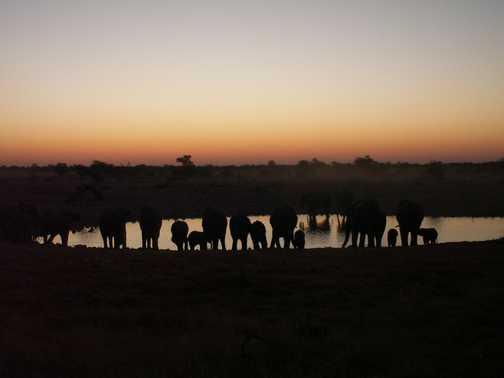 Elephants at Dusk - Okaukuejo Waterhole