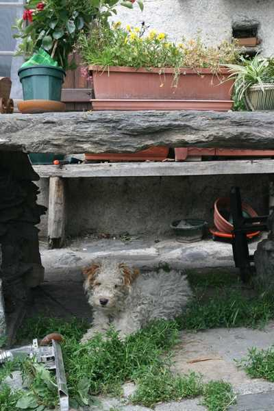 Vallee d'Oueil - Restaurant dog