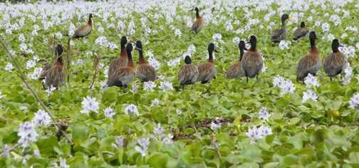 Lake Naivasha .... plenty of birds to watch
