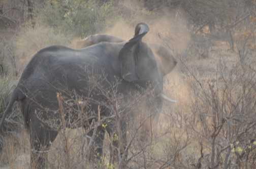 Elephant having a dust bath, Northern Namibia