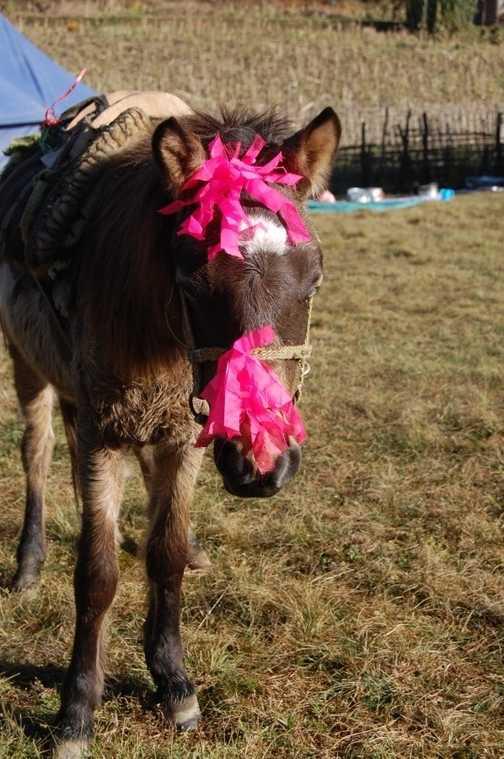 My Little Pony?