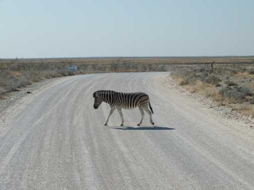 The cliche zebra crossing