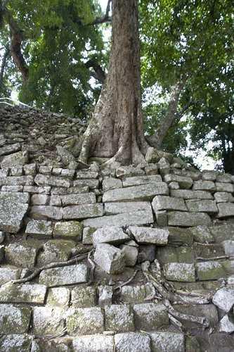 Tree and ruins, Copan