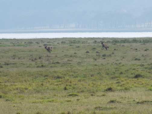 Secretary Bird, Lake Nakuru