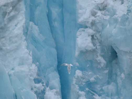 Bird against glacier