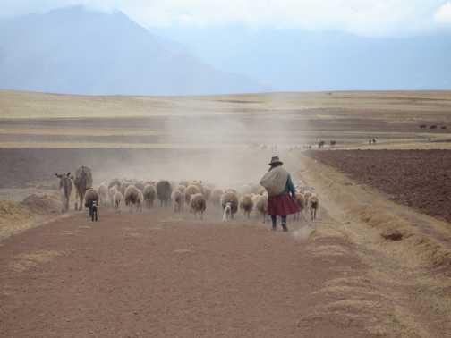 Shepherding near Maras