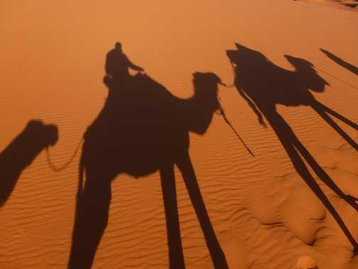 Caravan of camels.