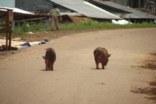 this little piggy went to market