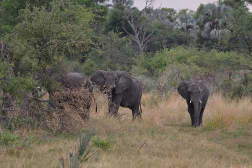 Our first elephants in the Okavango delta