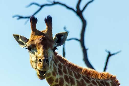 Zebra - on the way to Lesotho