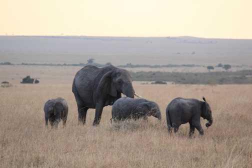 Elephants on the Masai Mara
