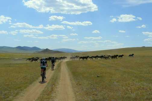 Cycling with horses