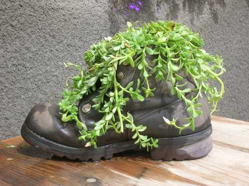 """My fovourite old """"boot"""" sorry Marjorie!!!"""