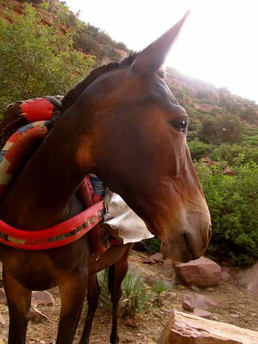 Our safety mule, Fadna