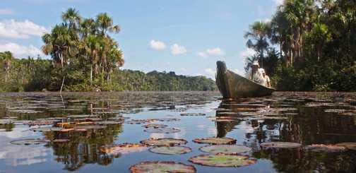 Jungle Lake 1