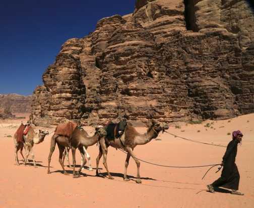 Bedouin leading Camels, Wadi Rum