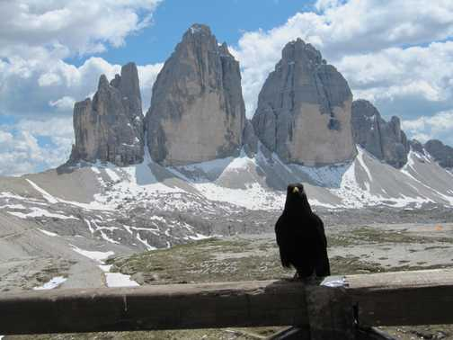 Effing cheeky bird, Tre Cime de Lavaredo, Dolomites, Italy