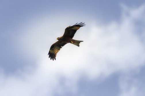 soaring too