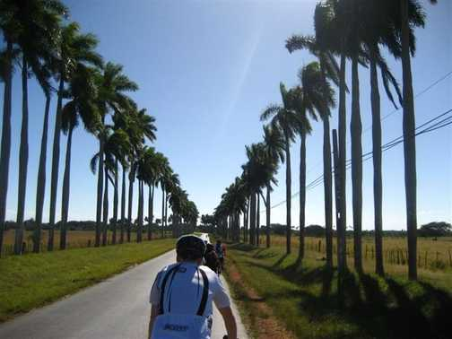 Royal Palm Avenue