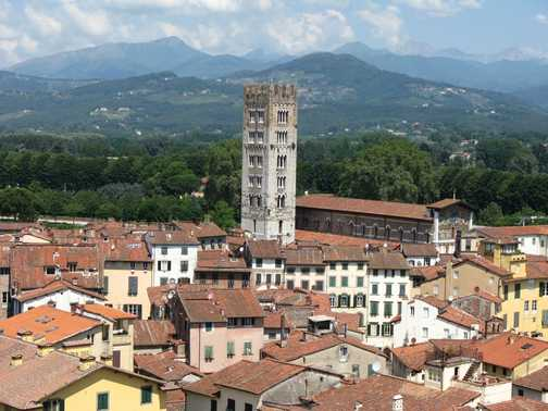 Lucca from the tower with trees on top