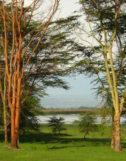 Lake Naivasha from Loldia House