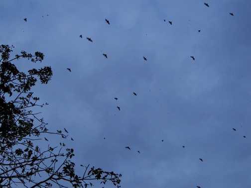 Bats,