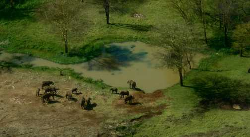 Lewa Elephants