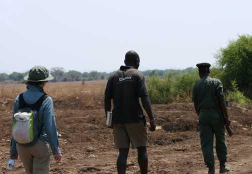 Foot safari in search of lion