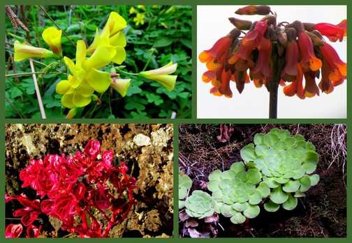 Plant Collage Levada do Canical Walk
