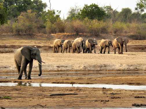 Eli family crossing the Luangwa River