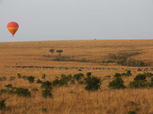 Sated lion, Maasai Mara
