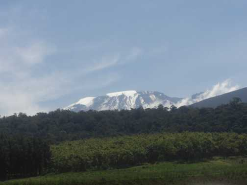 Our goal, Kilimanjaro from Londorossi Gate