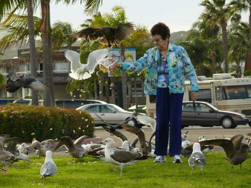 San Diego lady feeding the birds