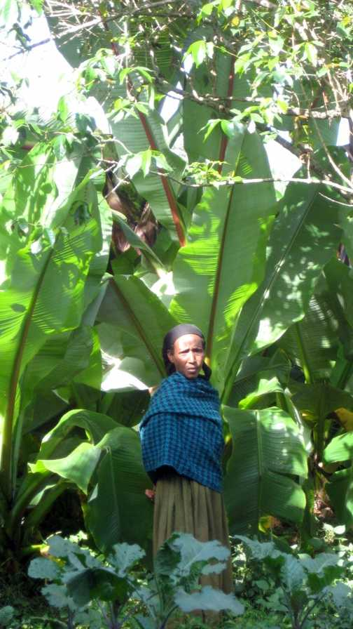 Lady in banana trees -Wendo Genet