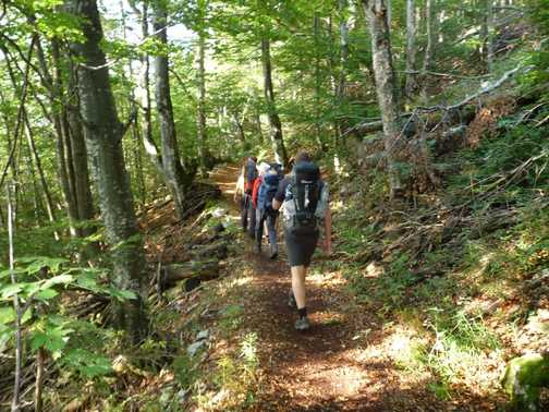 Day 2 - The walk starts through a forest north of Bohinj Lake