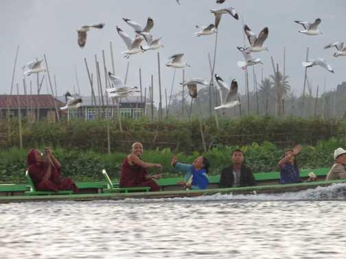 Feeding the birds Inle Lake