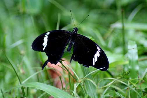 Butterfly at camp 5