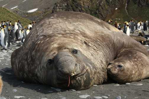 Eli Seal and female