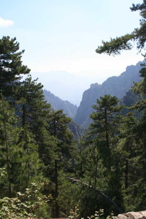 View down the Tavignano Gorge