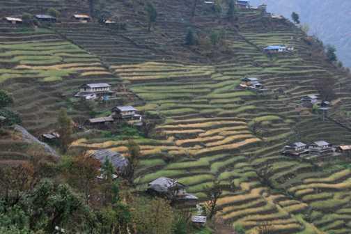 Terracing near Chomrong