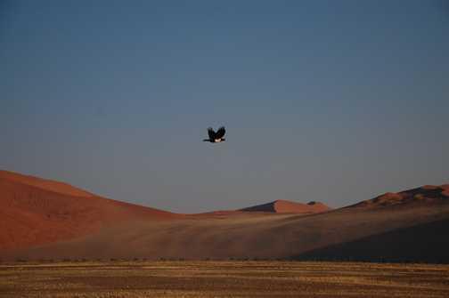 Vast Namibian desert