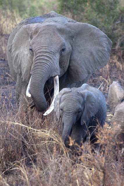 Camp - Ngorongoro Crater Rim