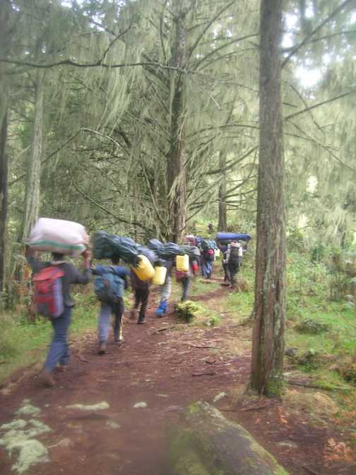 Porters-heavy loads thru. the rain forest.