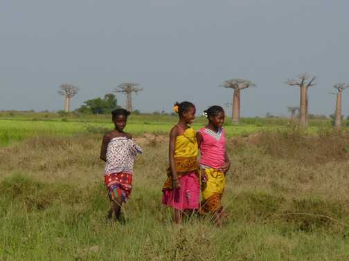 Malagsy Girls and Baobabs