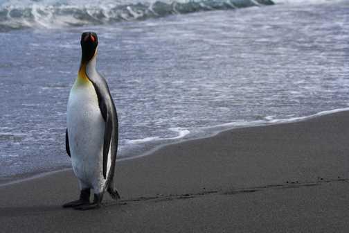 Akademik Sergey Vavilov: Erebus and Terror Gulf - Antarctica