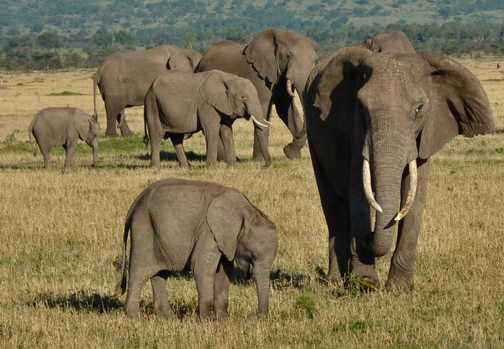 Mara Eli herd