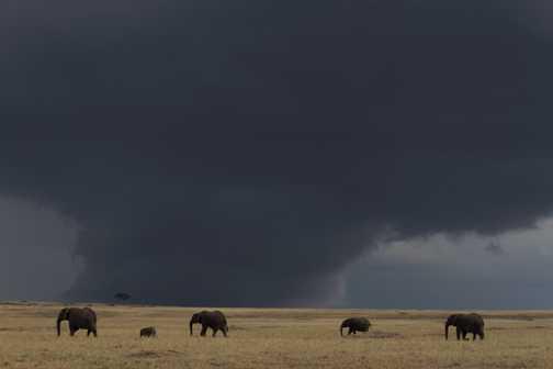 Elephants under a stormy sky