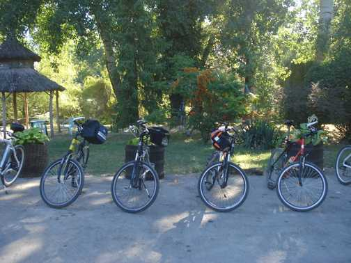 Bikes ready to go