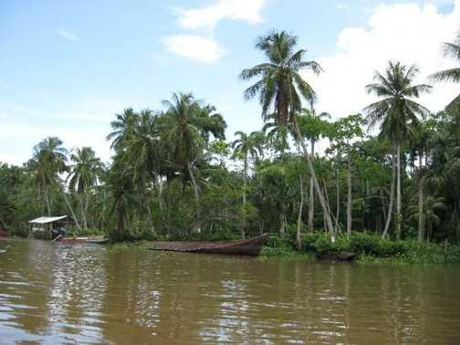 Orinoco Delta, Venezuela